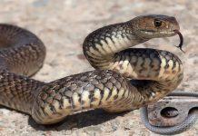 đi đường gặp rắn đánh con gì