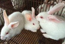Mơ thấy thỏ trắng đánh con gì?